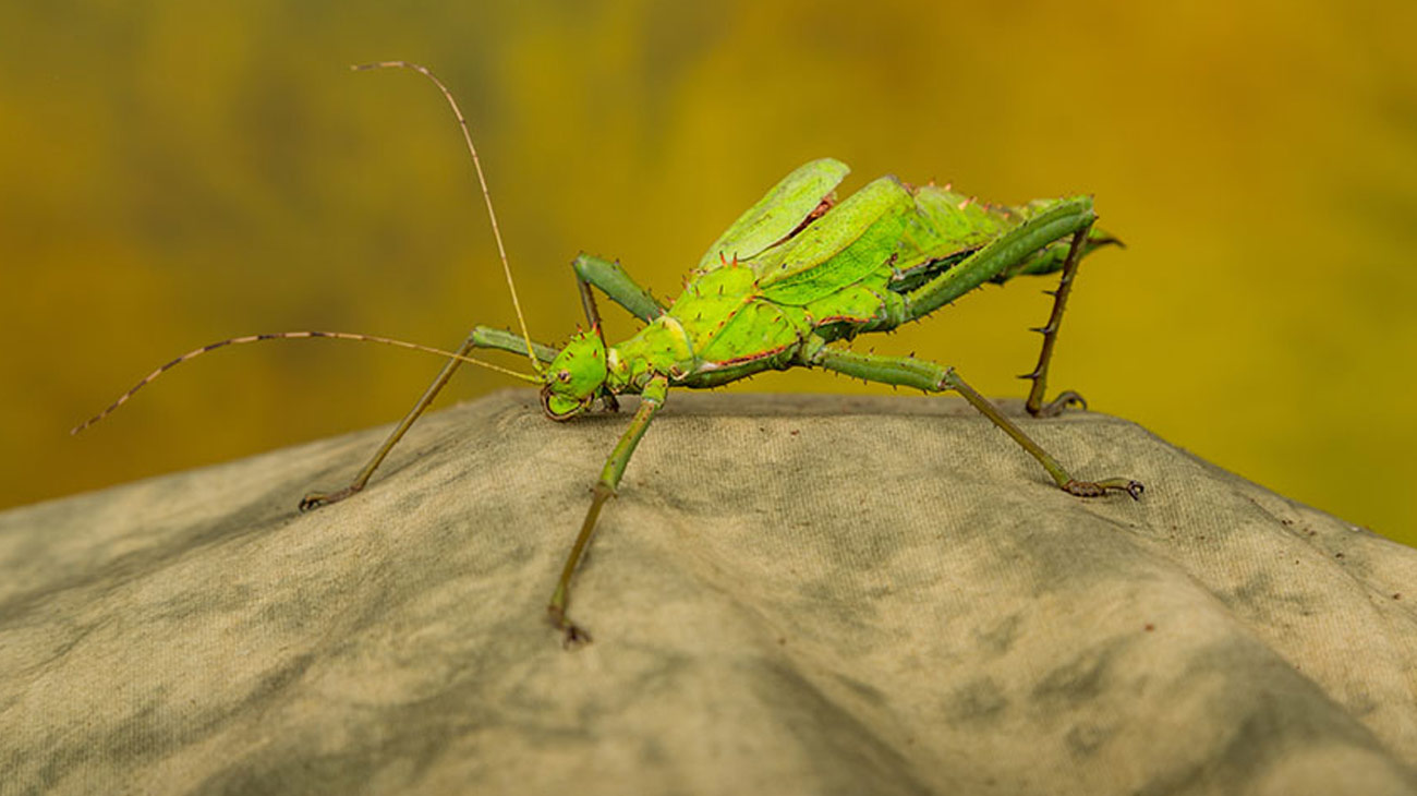 A strange looking green insect beastie